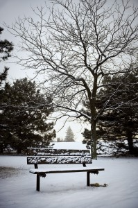 Lonely_Bench_2